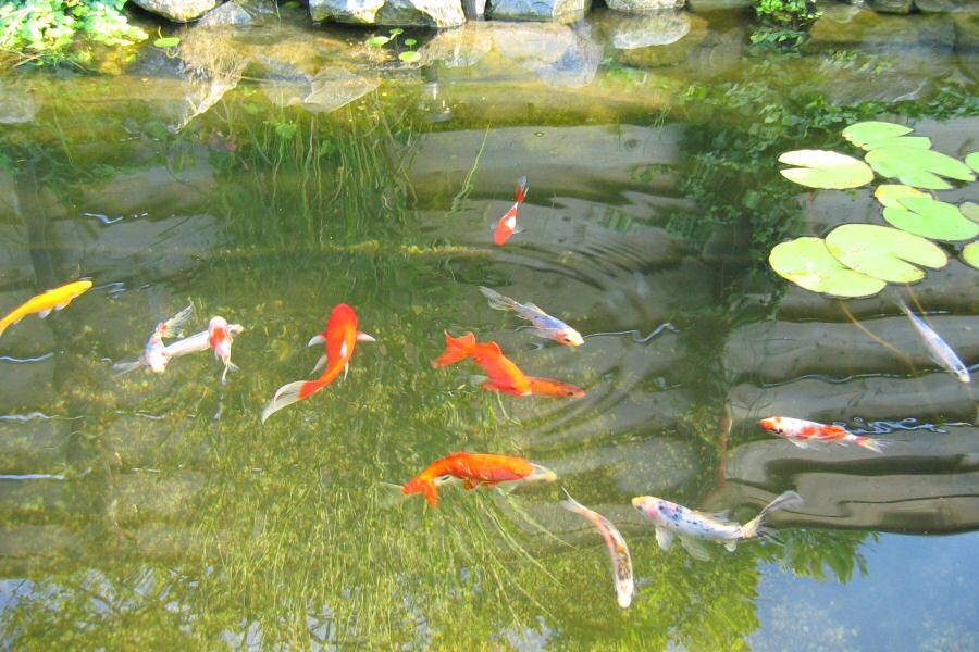 Vissen In Vijver : Vissen met stef stichting intermobiel